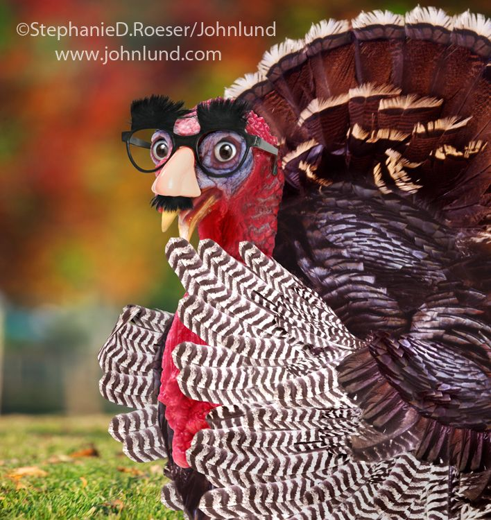 A Funny Thanksgiving Turkey Wearing A Groucho Glasses Diguise Funny Thanksgiving Animal Dress Up Stock Photos Funny