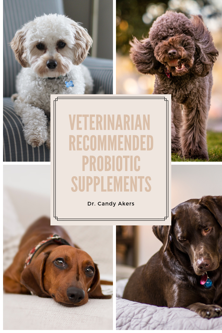 Ever Wondered About The Benefits Of Probiotics For Your Dog Or Cat