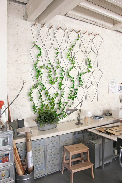 indoor lattice display for growing vines