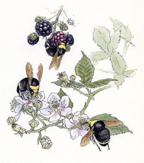 Blackberry Illustration Google Search Bee Art Bee