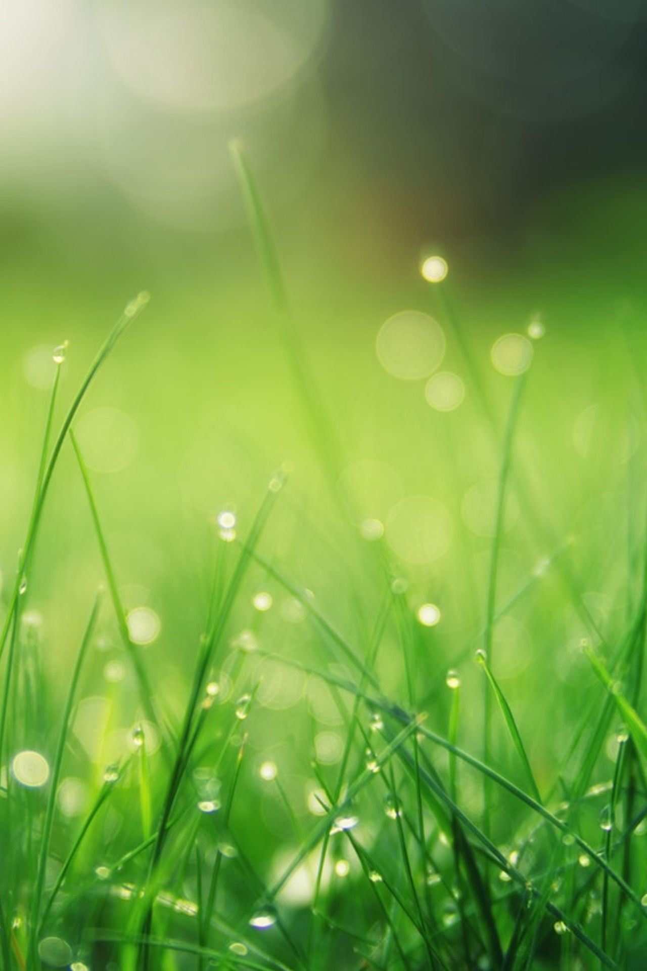 Should You Trust The Official Racecourse Going Description Grass Wallpaper Green Nature