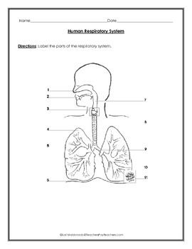 Students will label the parts of the respiratory system on the ...