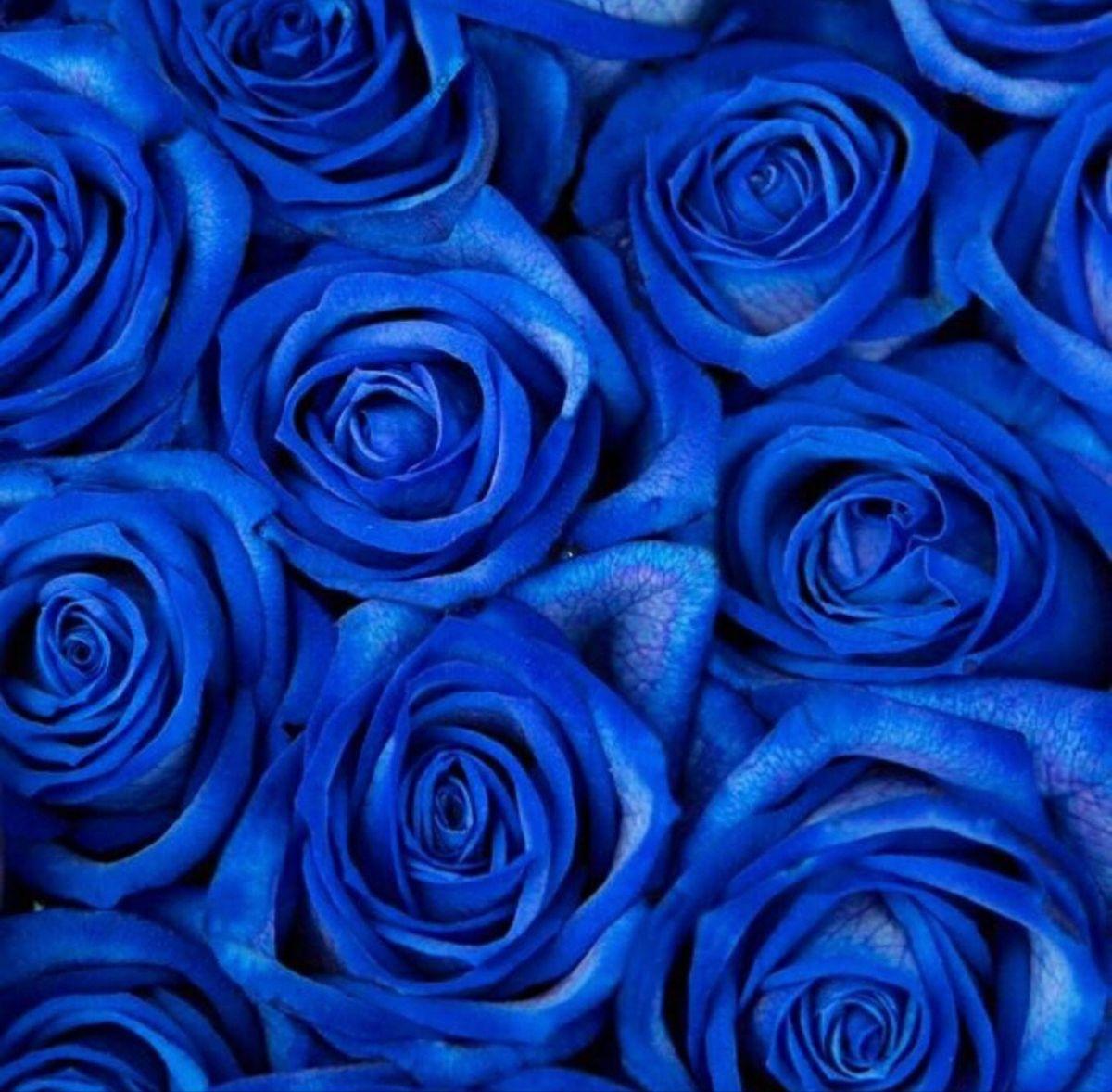 Blue Rose Blue Flower Wallpaper Blue Aesthetic Pastel Blue Roses Wallpaper