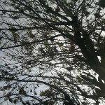 Hermoso día de otoño =) - via @danisa_colombo