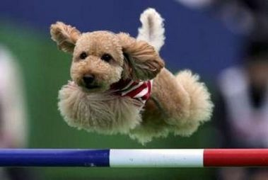 Brown Phantom Toy Flying Dog Training Dog Training Jumping