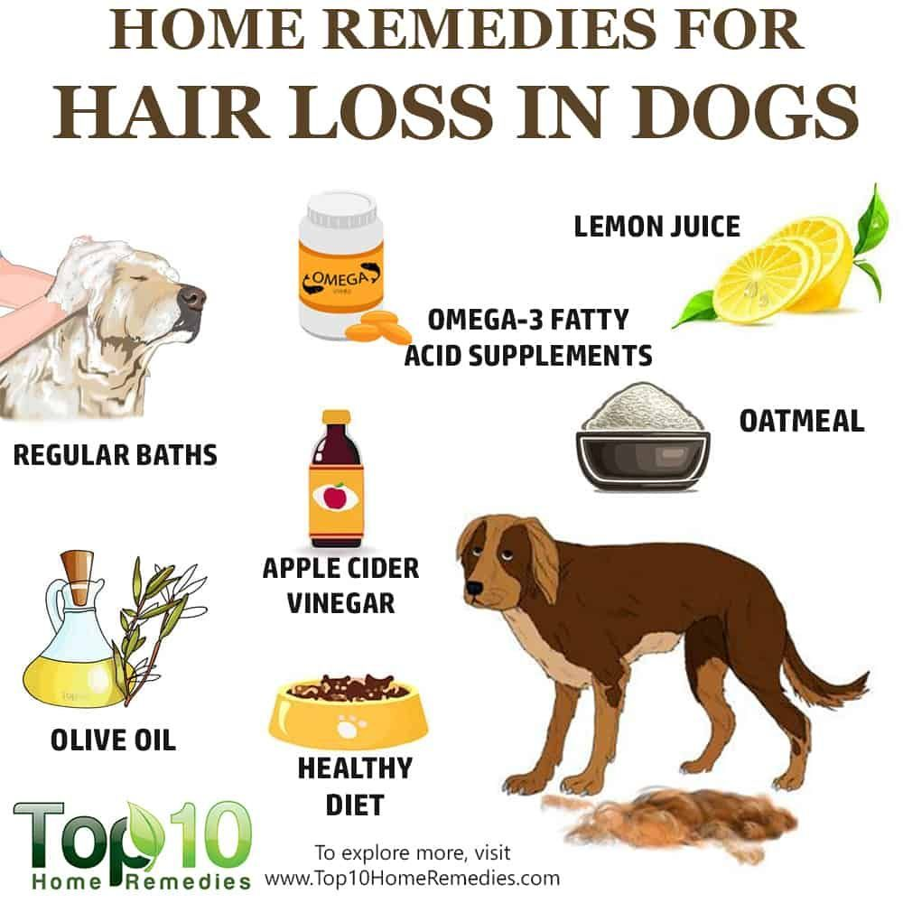 10 Home Remedies to Help with Hair Loss in Dogs Top 10