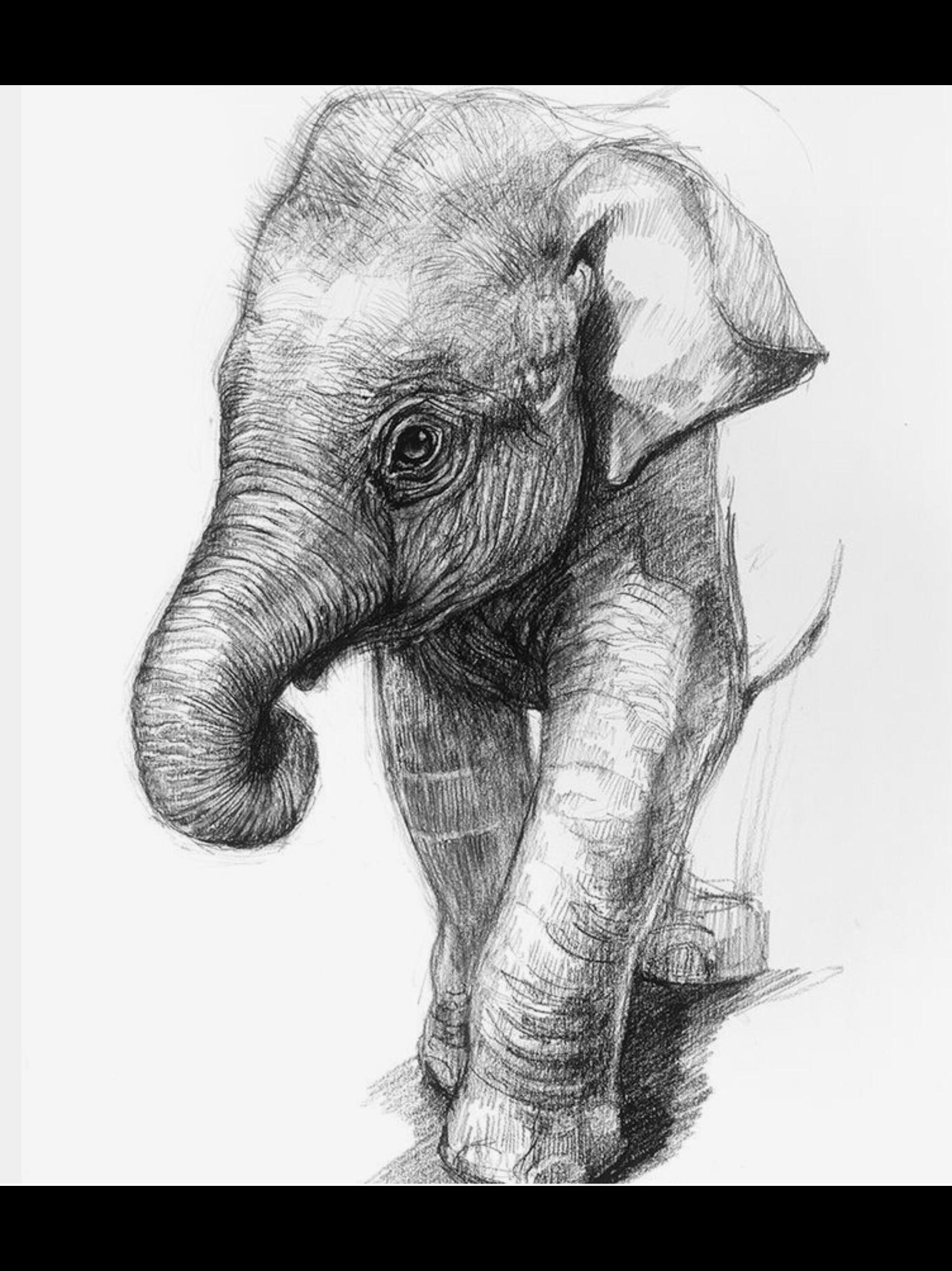 Elefante Arte De Elefante Dibujos Retratos Dibujos Realistas