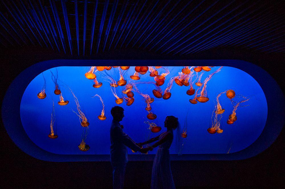 Chinese wedding at the monterey bay aquarium teaser