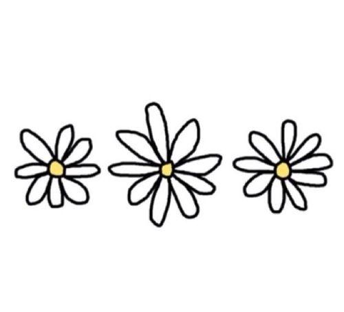 Flowers Transparent Papatyalar Cerceve Desenler