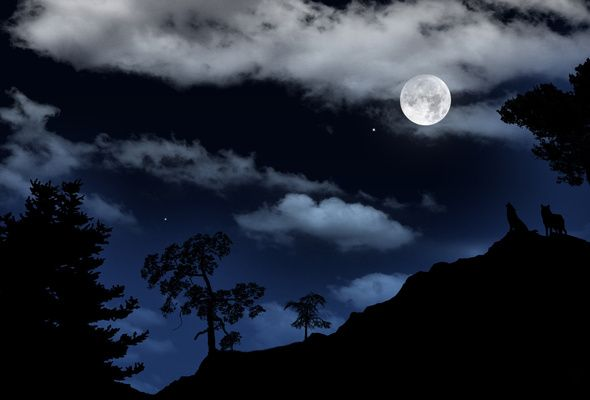 Night Moon Landscape Moon Pictures Full Moon Pictures Wolf Moon