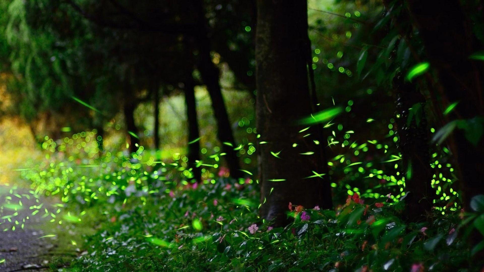 Firefly HD Wallpaper