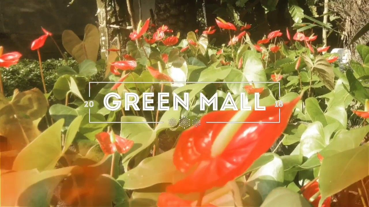 Know Green Mall Best Plant Nursery In Kolkata Part 1