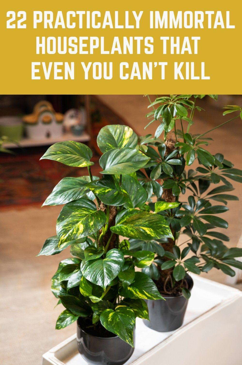22 Practically Immortal Houseplants That Even You Can't Kill