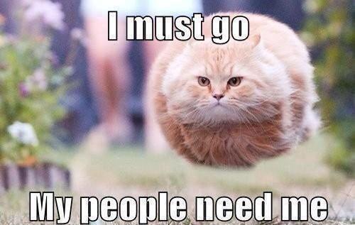 Pix For \u003e Funny Cat Jokes Tumblr
