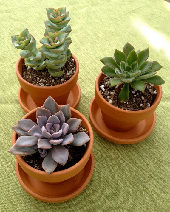 10 Succulent Party Favors For Wedding