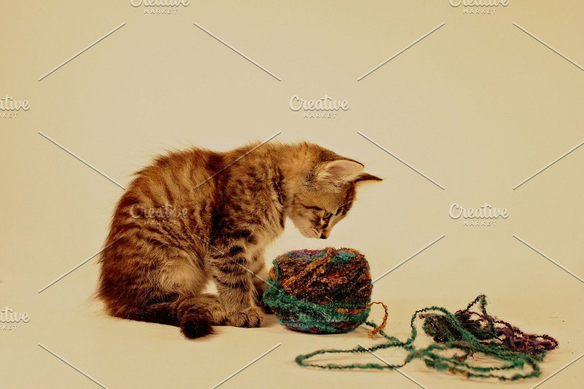 Kittens And Yarn In 2020 Kittens Yarn Adorable