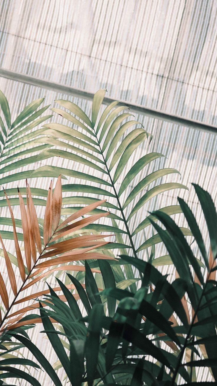 rabik on plant wallpaper aesthetic wallpapers