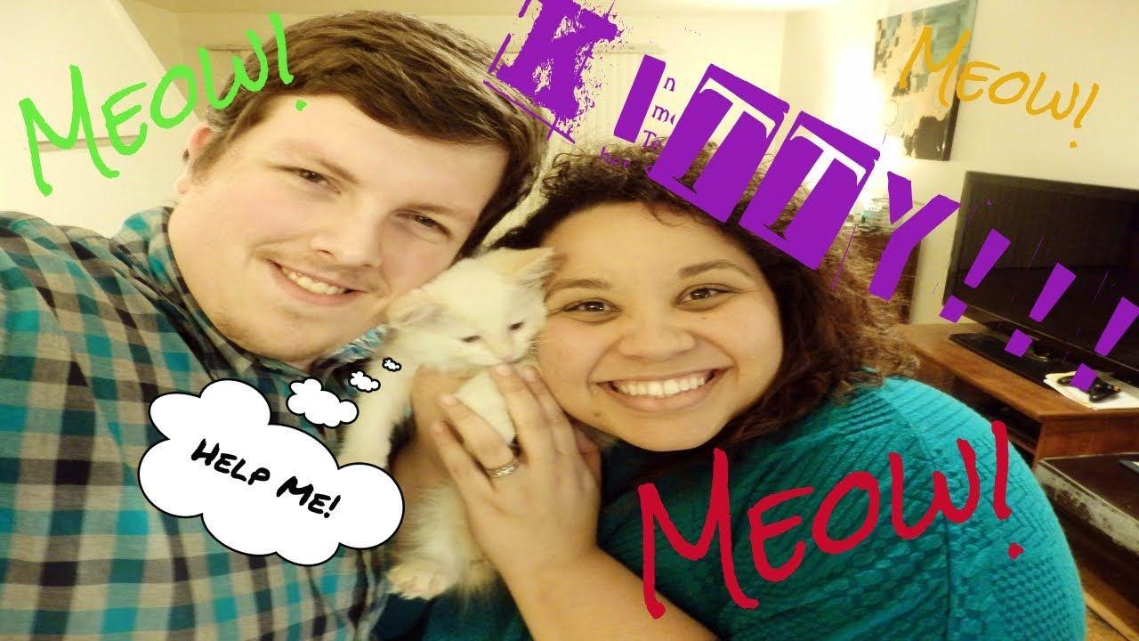 YouTube Youtube, Meowt, Matthews
