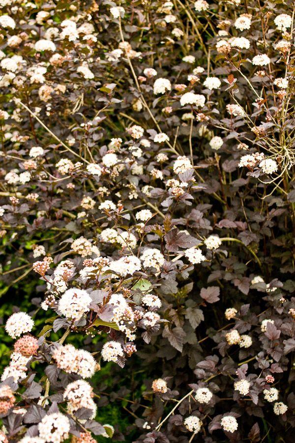 Botanic Garden der Cambridge University © Die SELLERIE