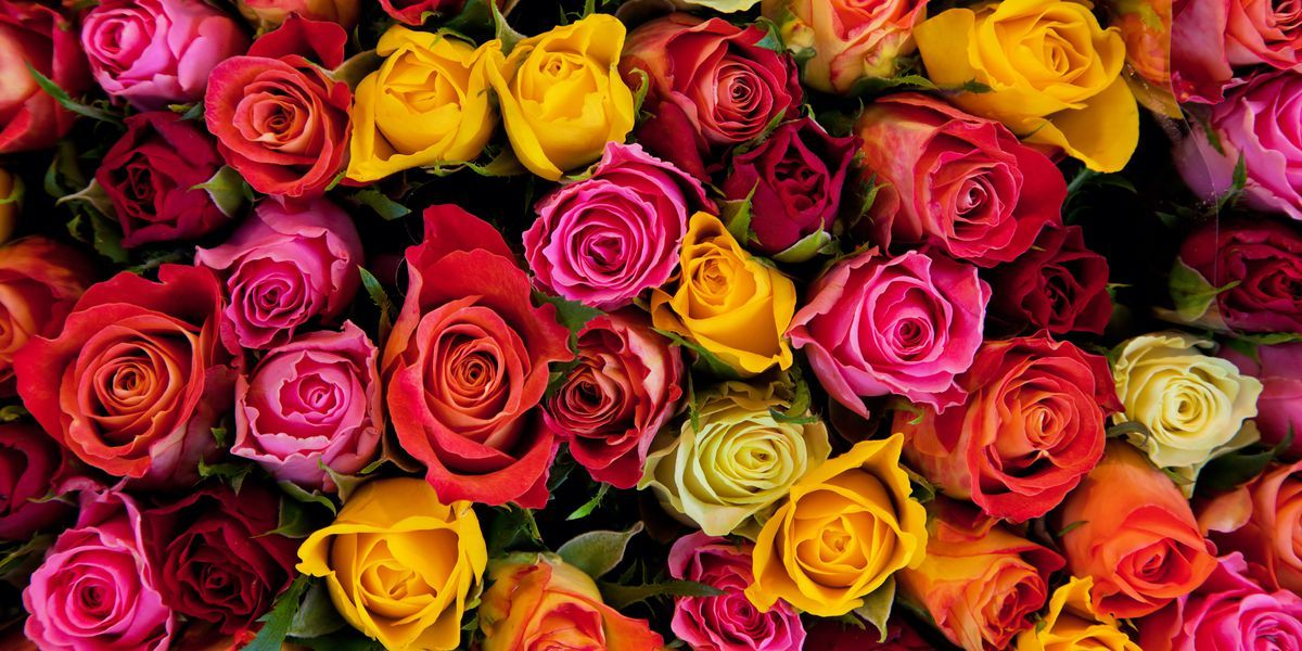 Coral Roses Are The Perfect Way To Celebrate Your First Valentine S Day Together Rose Color Meanings Avas Flowers Colorful Roses