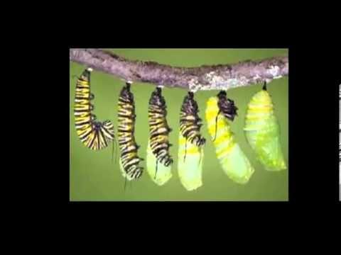 ▶ La metamorfosis de la mariposa - YouTube