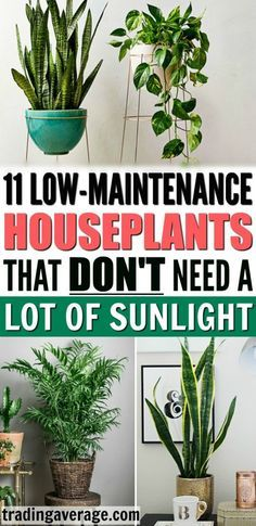11 Houseplants That Don T Need A Lot Of Sunlight To Grow Low Maintenance Garden Plants