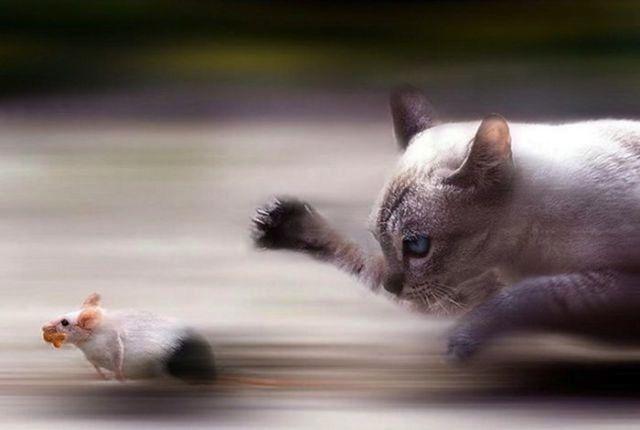 perfectanimalshots20 36 Perfectly Timed Animal Shots