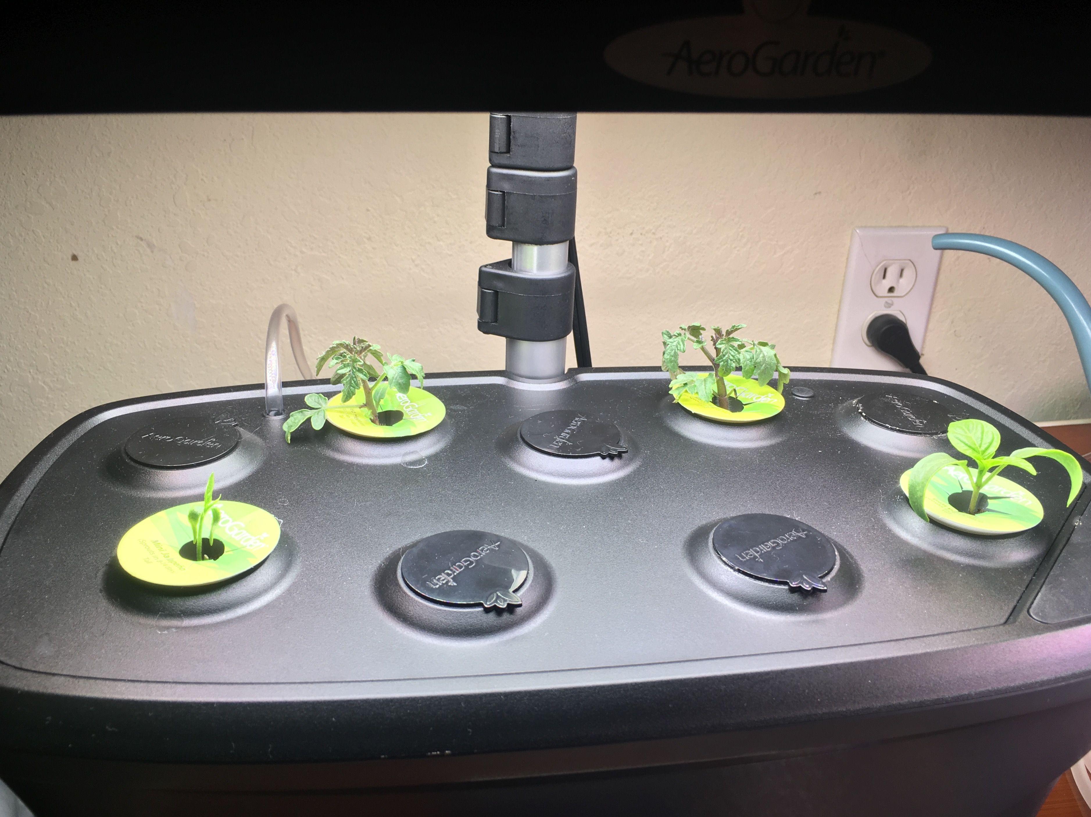 Pin By Laura Watson On Aerogarden Kitchen Appliances 640 x 480