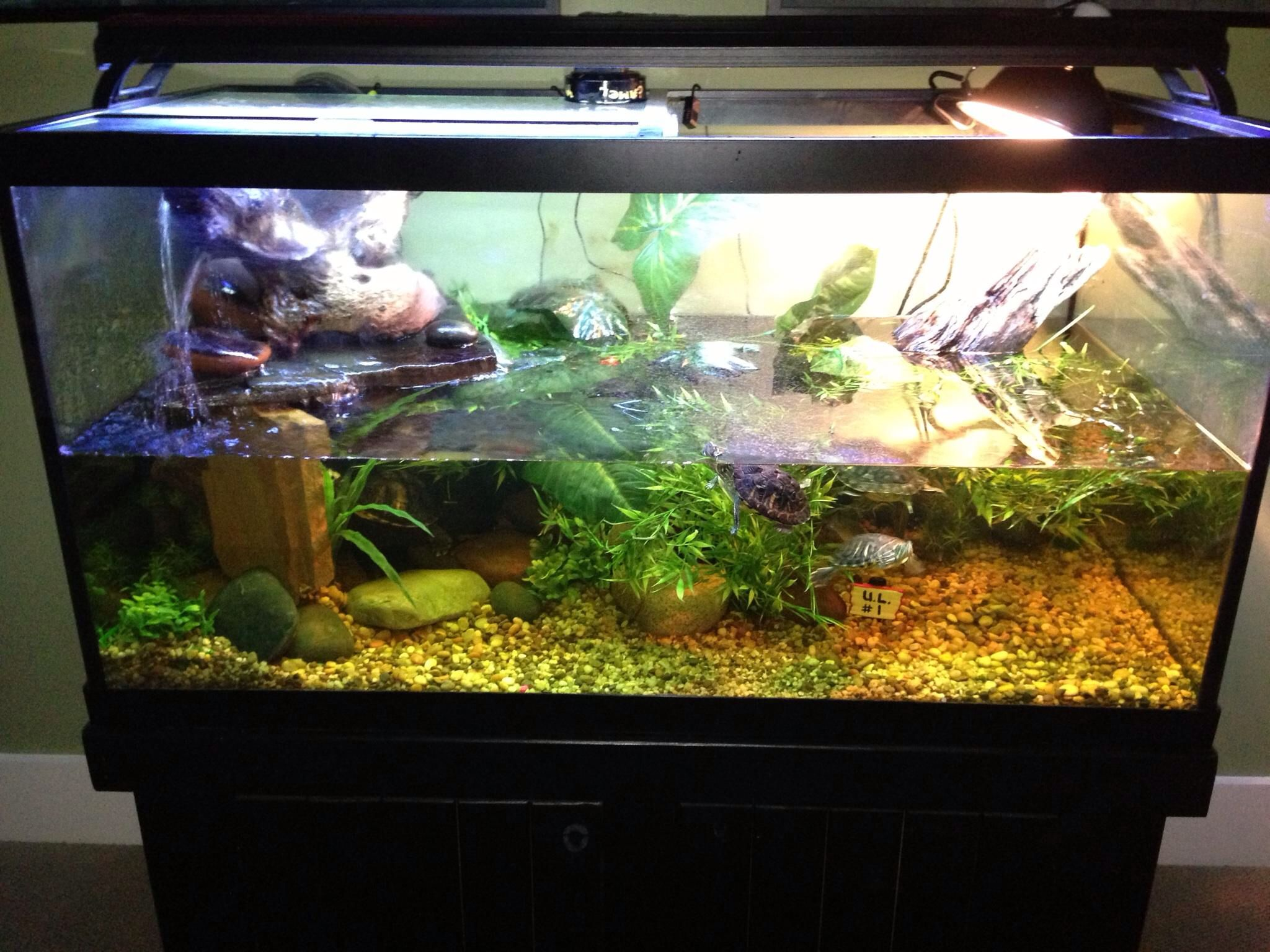 Turtle Tank Decor Turtle Tank At Our Clients Home Here In Louisville Ky Our