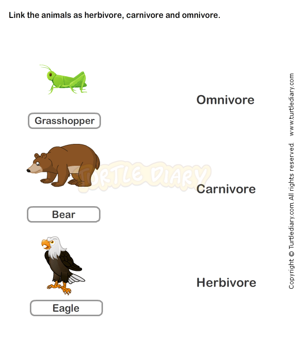 Food chain worksheet 5 science worksheets grade 2 worksheets food chain worksheet 5 science worksheets grade 2 worksheets food chain worksheet ibookread