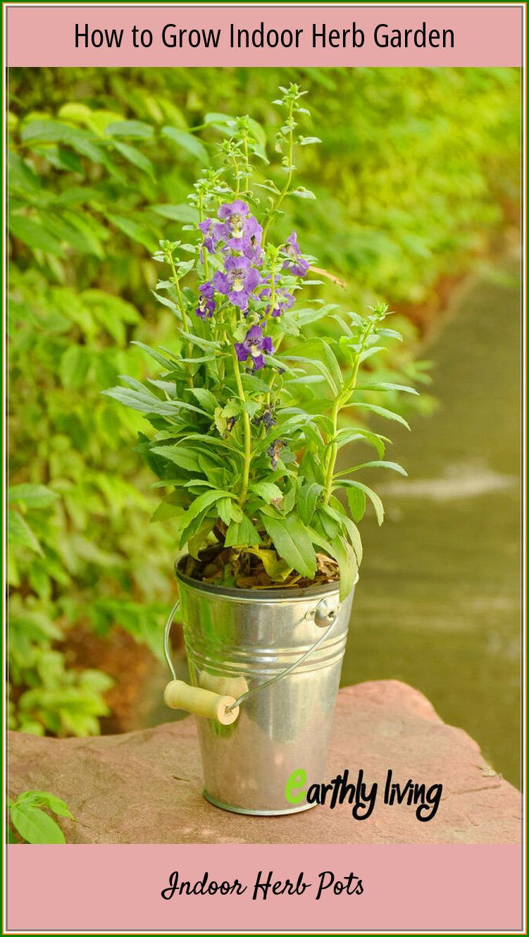 No Need To Buy Herbs: Grow Indoor Herb Pots At Your Home ...