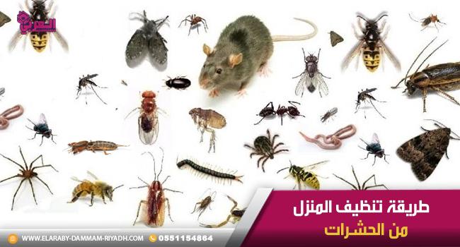 طريقة تنظيف المنزل من الحشرات Place Card Holders Place Cards Dammam