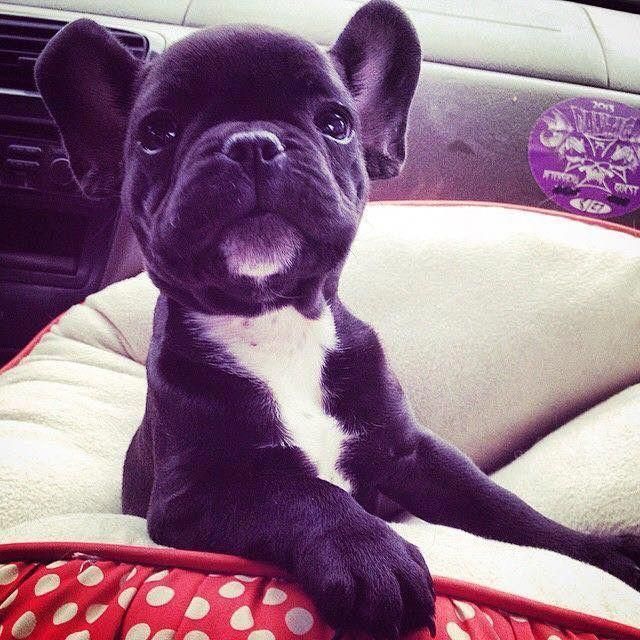 Doglover Cute Baby Animals Cute Animals Cute Dogs