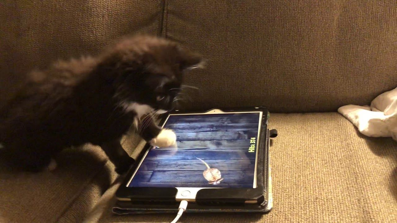 Cat Plays Ipad Game Mouse For Cats Cat Playing Cat Mouse Ipad Games