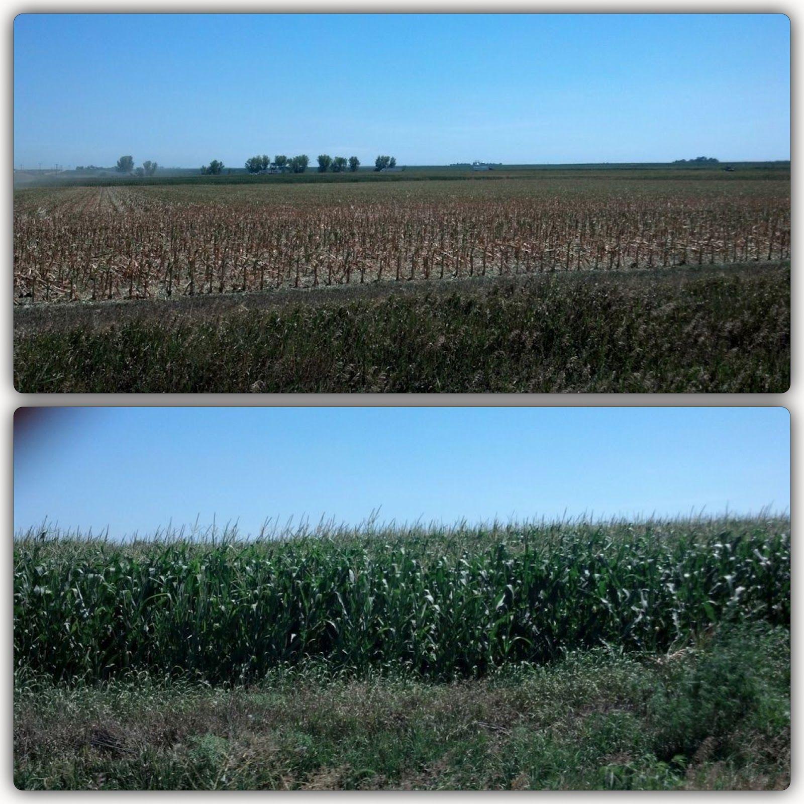 Robot Tractor Drought vs Irrigation in Nebraska