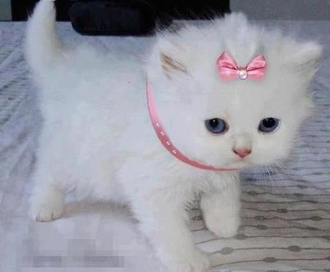 she looks like Marie from the Aristocats