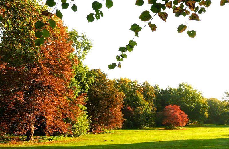 #Tiergarten #Berlin im #Oktober, #Germany    © Berolino, Wikipedia
