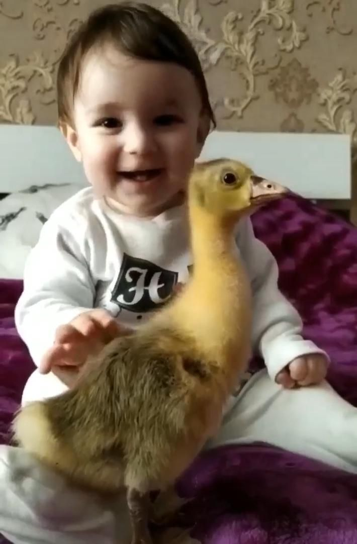 A baby and a duckling