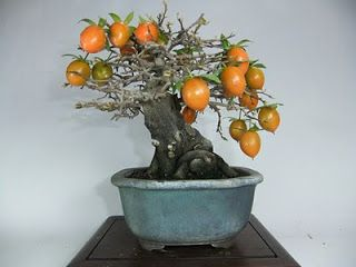 Shohin y mini bonsai: Galeria mini-shohin bonsai