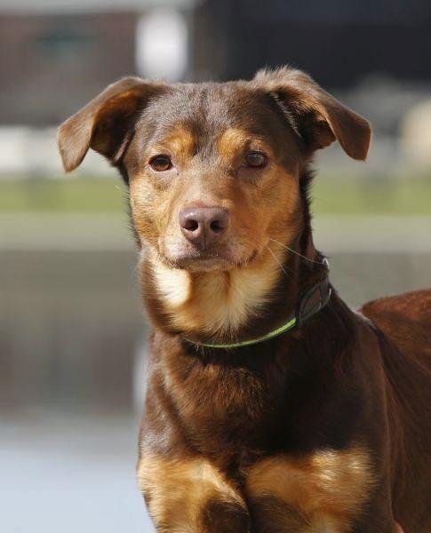 Hallo, mein Name ist Schlumpf. Hund Tierfreund