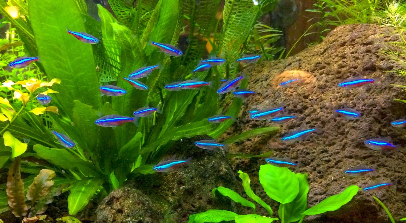Blok888 top 10 most beautiful freshwater fish in the for Exotic fish tanks