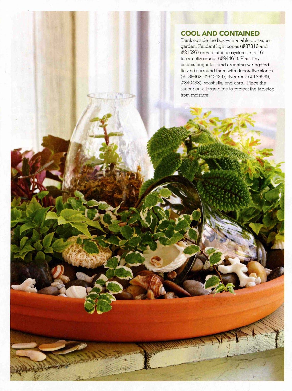 Tabletop Gardens From Lowes Creative Ideas Magazine Plant Plant