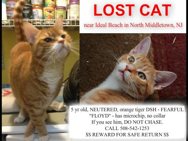 Lost Cat Monmouth County Sharing 7 21 12 Cats Lost Cat Dog Cat