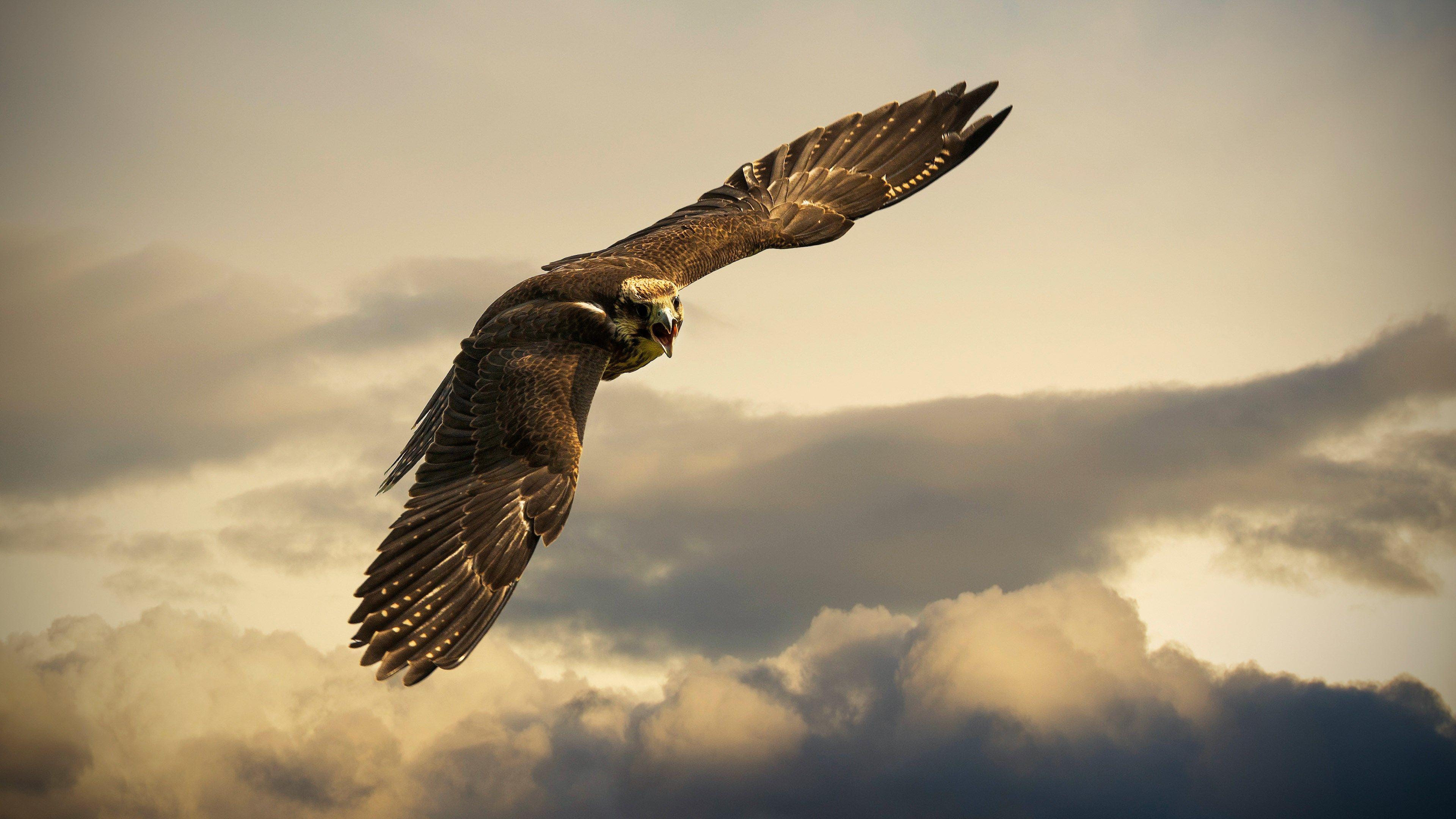 4k pc hd wallpaper free download (3840x2160) Bald eagle