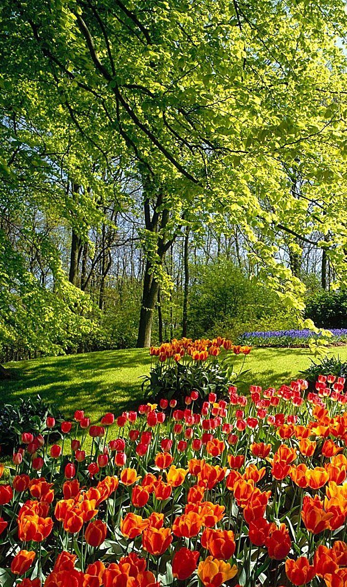 Landscape flower garden  Pin by Juliana Sulja on Craft Ideas  Pinterest  Spell caster