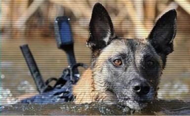 Navy Seal Dog Warrior In Training Military Working Dogs Action Dogs War Dogs