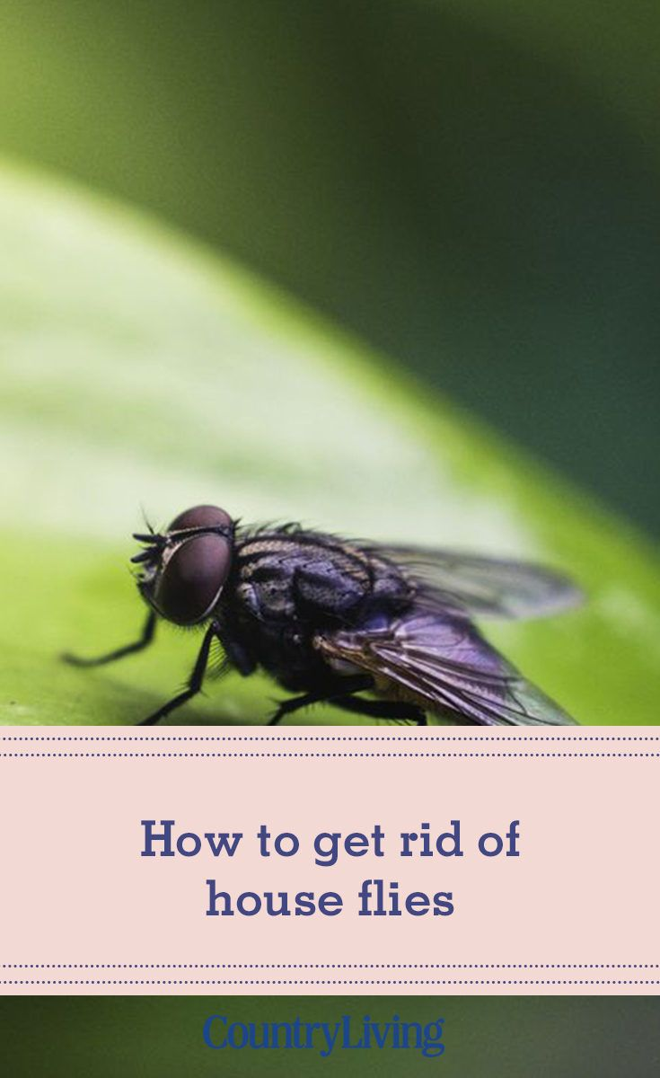 How to get rid of house flies contemporary home decor