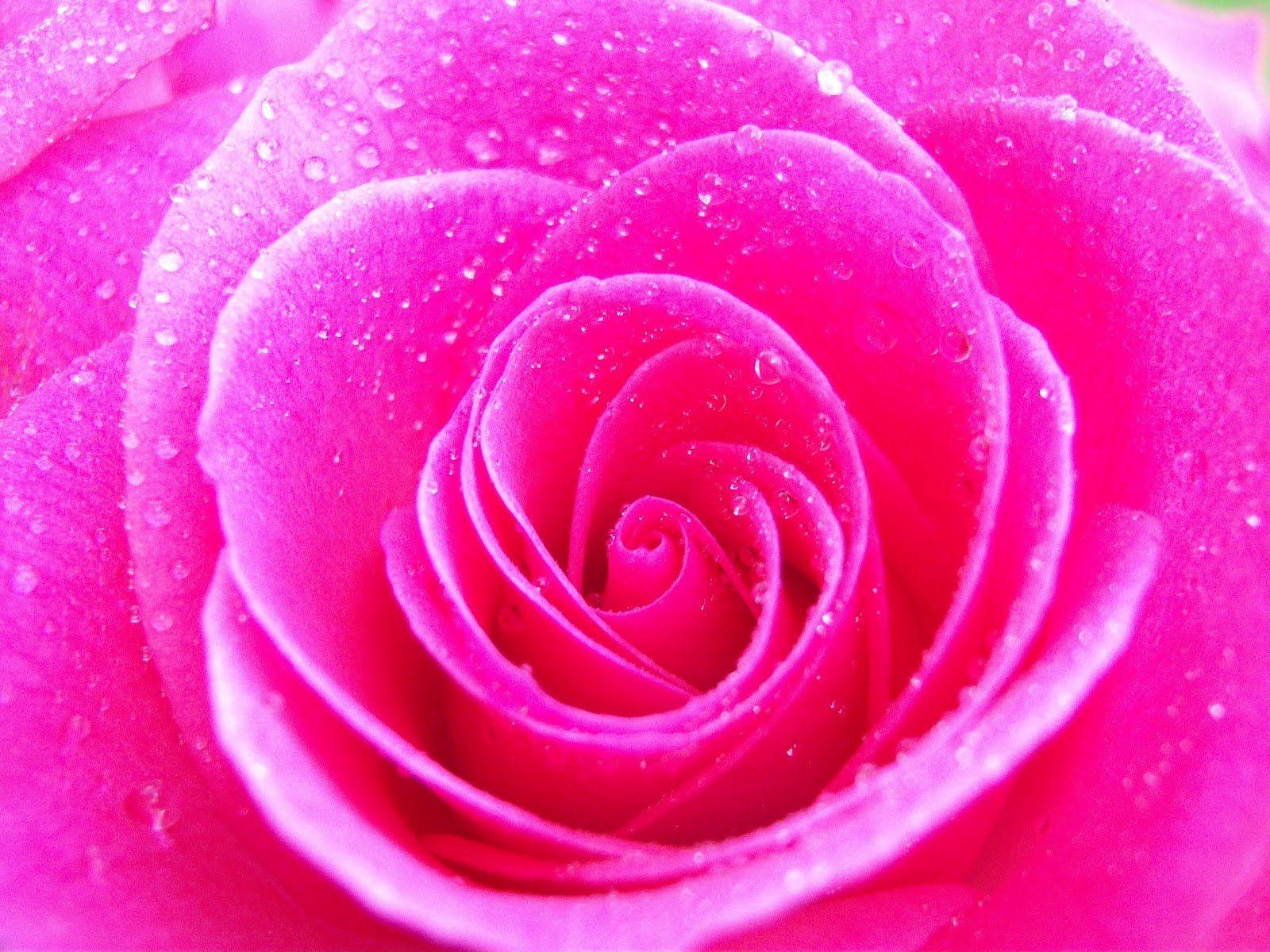 Http Www Viawallpaper Com Wp Content Uploads 2013 11 Floral