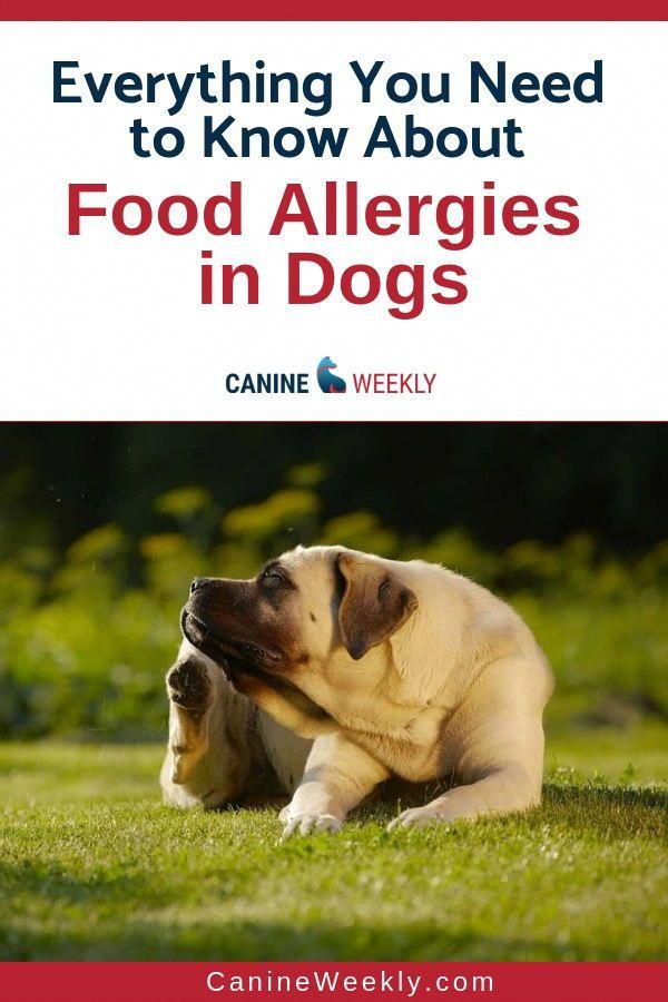 Food Allergies In Dogs Occur In A Similar Fashion To Most Other
