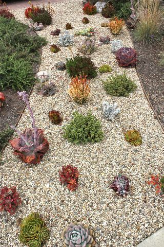 Pea Gravel And Assorted Succulents - Edge The Fire Pit Patio With